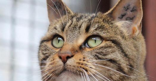 Tierheim Siebengebirge Katzen